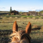 horse looking out at Big Bar Guest Ranch