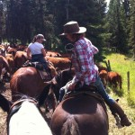 cattle drive 2014 Kamloops