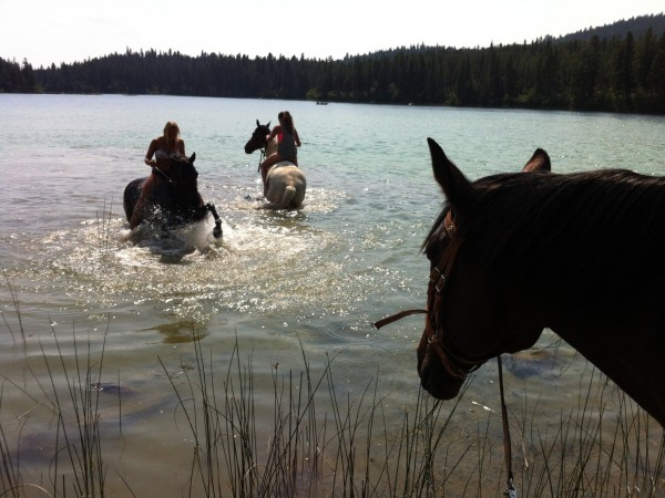 swimming with the horses Kamloops