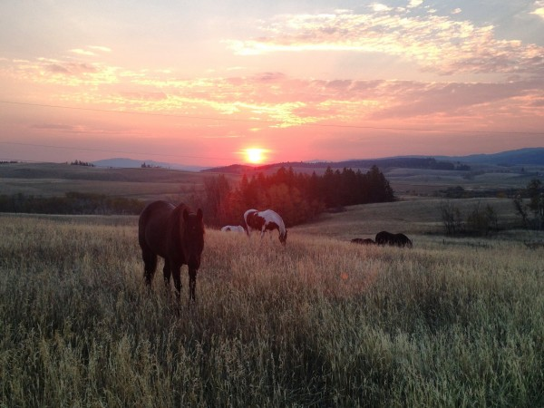 sunrise Campbell Hills Guest Ranch