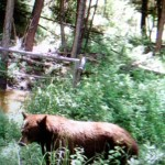 wild life on our property