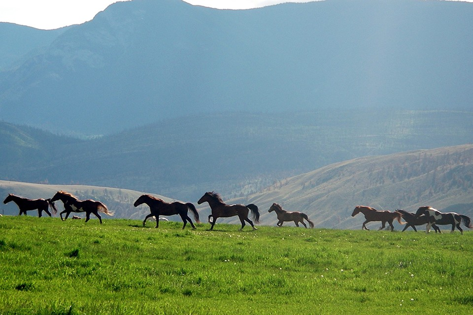 horses grazing field