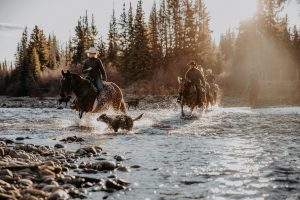 wranglers crossing the river while dog splashes around